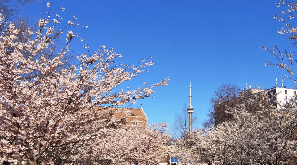5 things to do in Toronto today: Tuesday, April 25