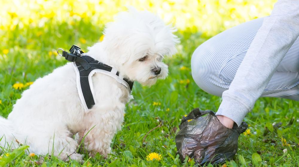 Waterloo will soon be using dog poop to create energy