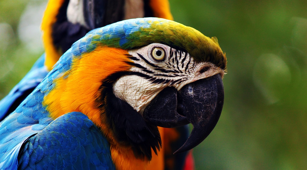 Parrot Yoga offers high-flying Hatha to help rescued feathered friends