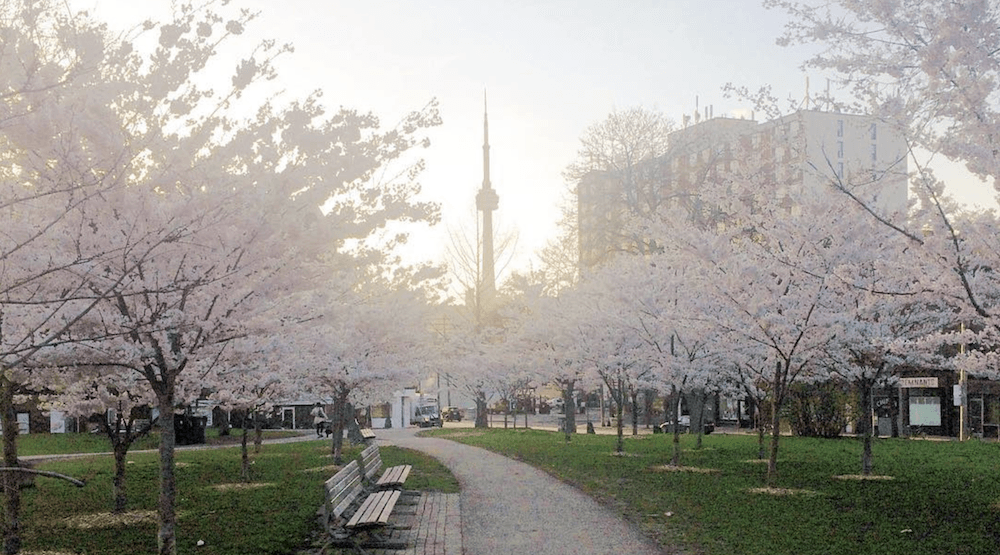 5 things to do in Toronto today: Monday, May 1