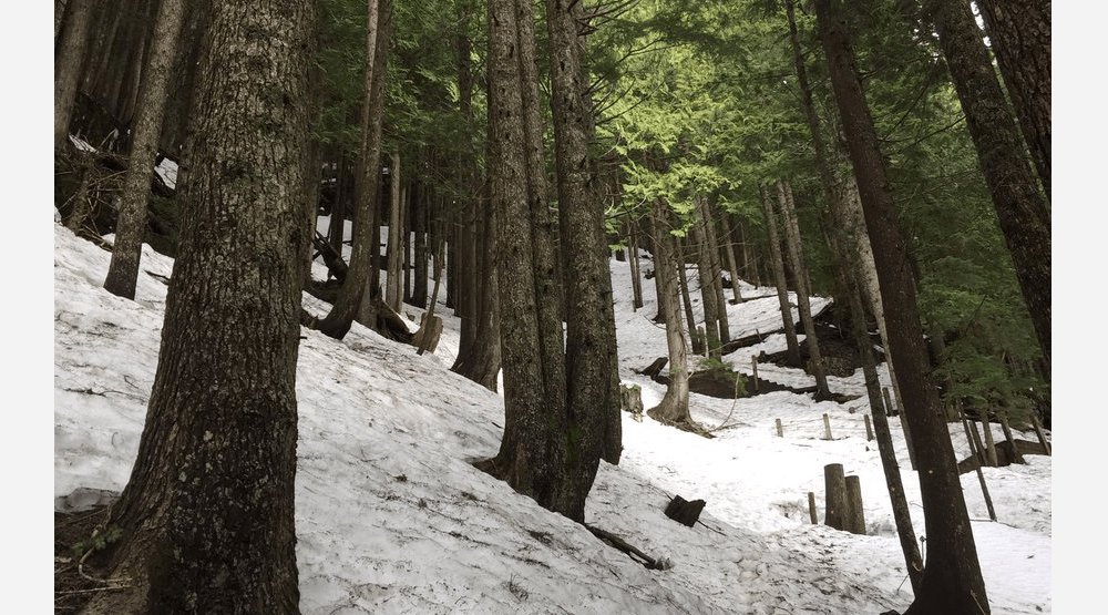 Two hikers rescued from closed (and still snowy) Grouse Grind on Thursday