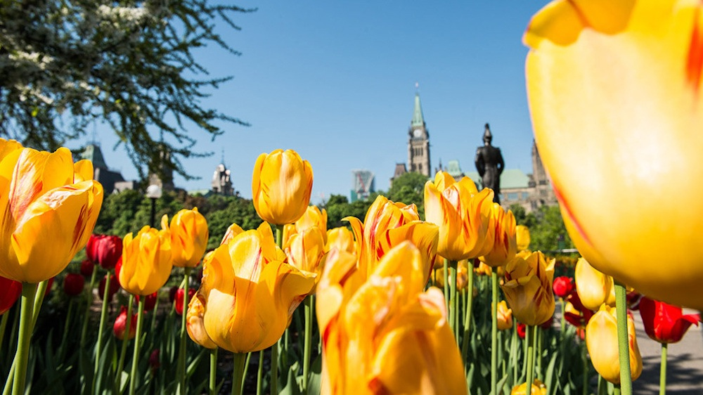 The largest Tulip Festival in the world is back in Ontario this spring (PHOTOS)