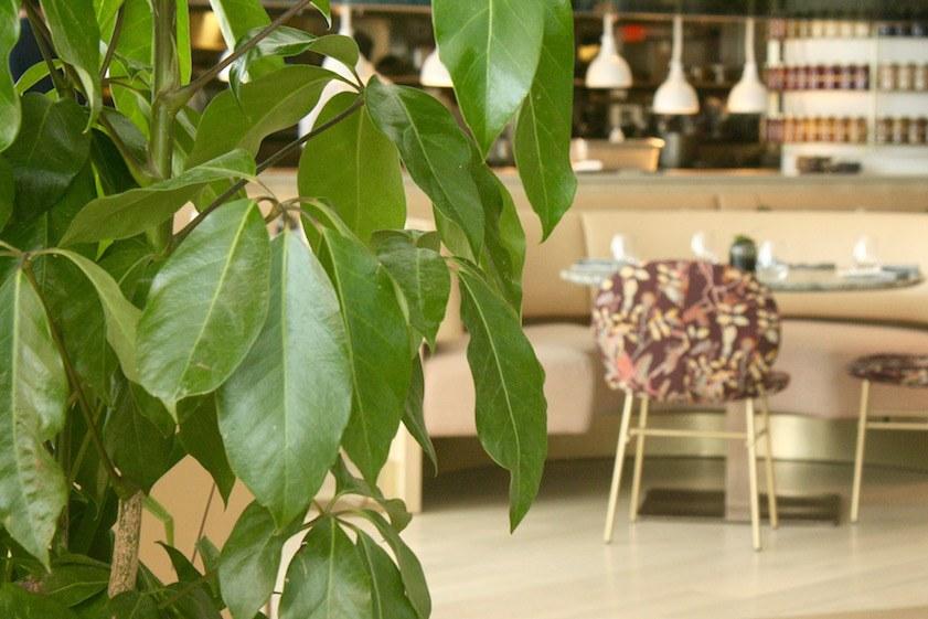 Botanist_interior 6