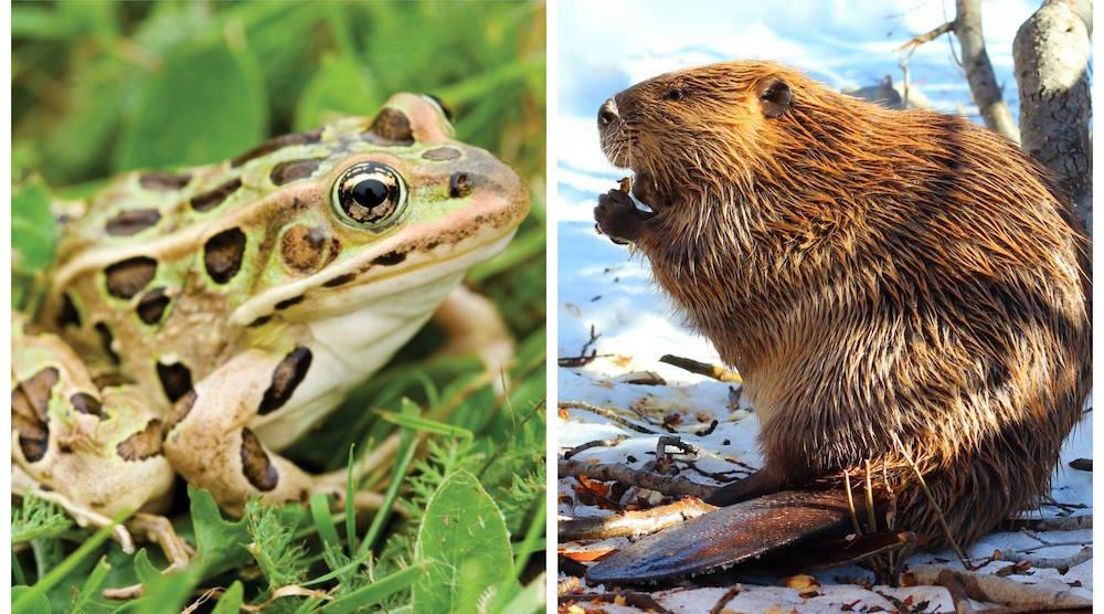 Calgary Zoo gives photographers rare access to exhibits May 13