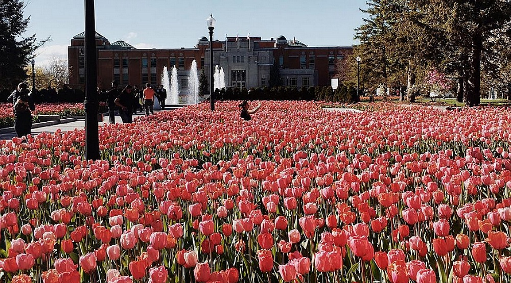 19 photos of the Montreal Botanical Garden's magical field of tulips