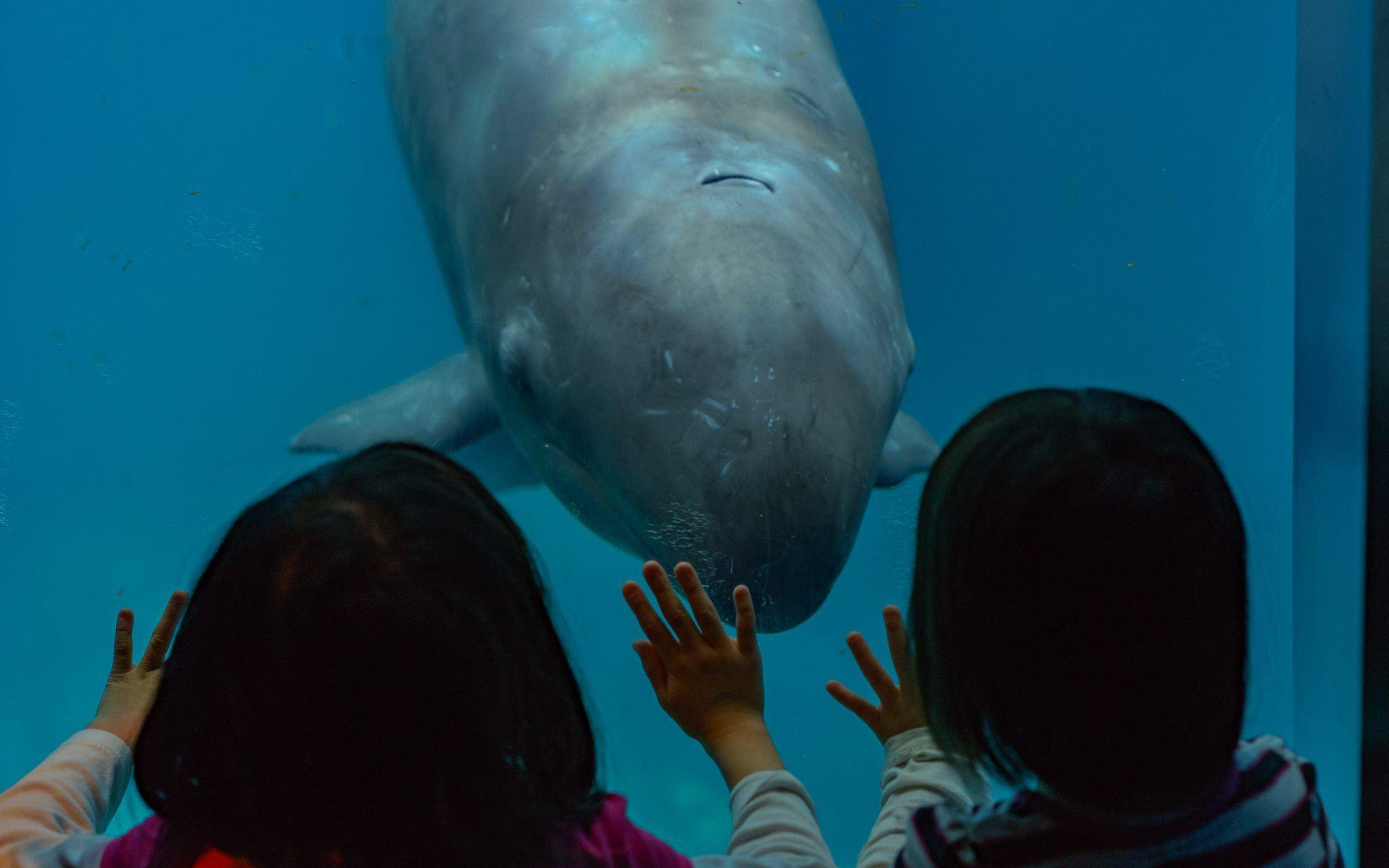 Chester vancouver aquarium
