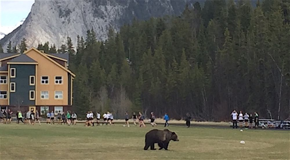 Bear wanders onto rugby field with team called the Bears (PHOTOS)