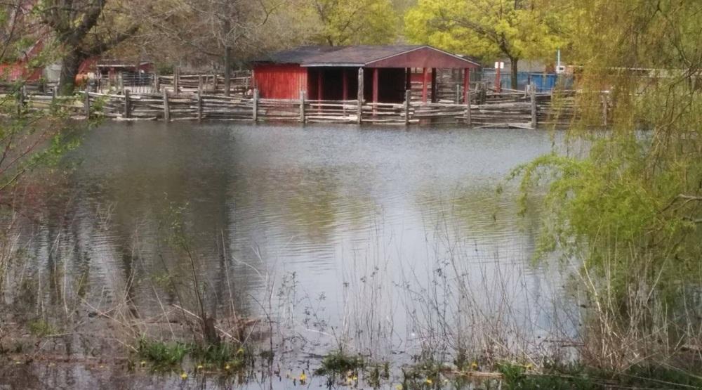 Toronto Islands' Far Enough Farm is flooded (PHOTOS)
