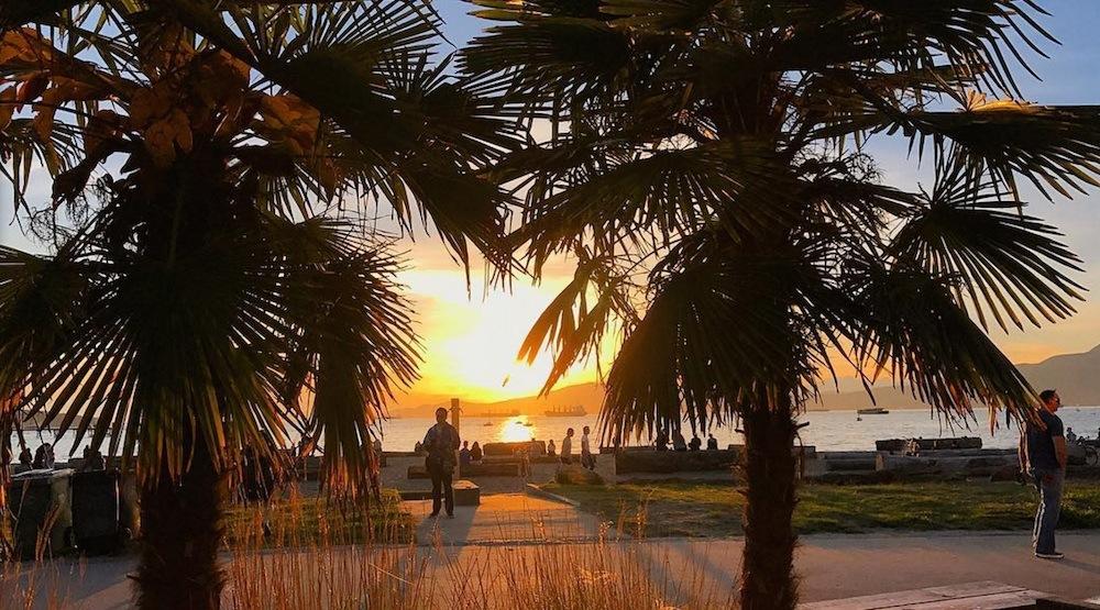 Kitsilano beach palm trees vancouver