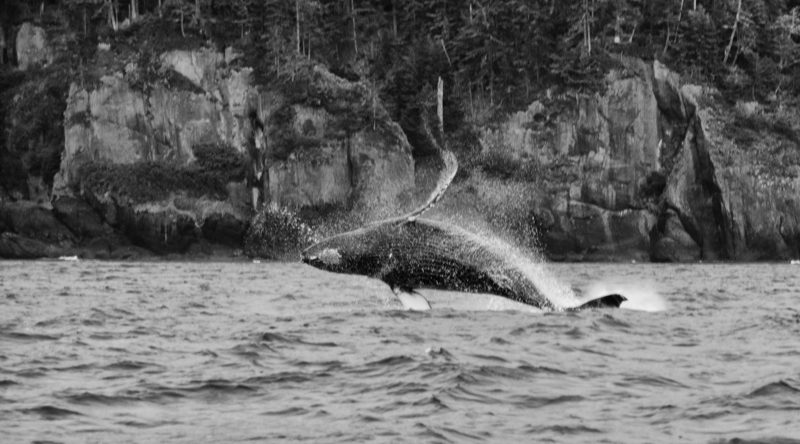 Get hooked on Haida Gwaii's culture and adventure