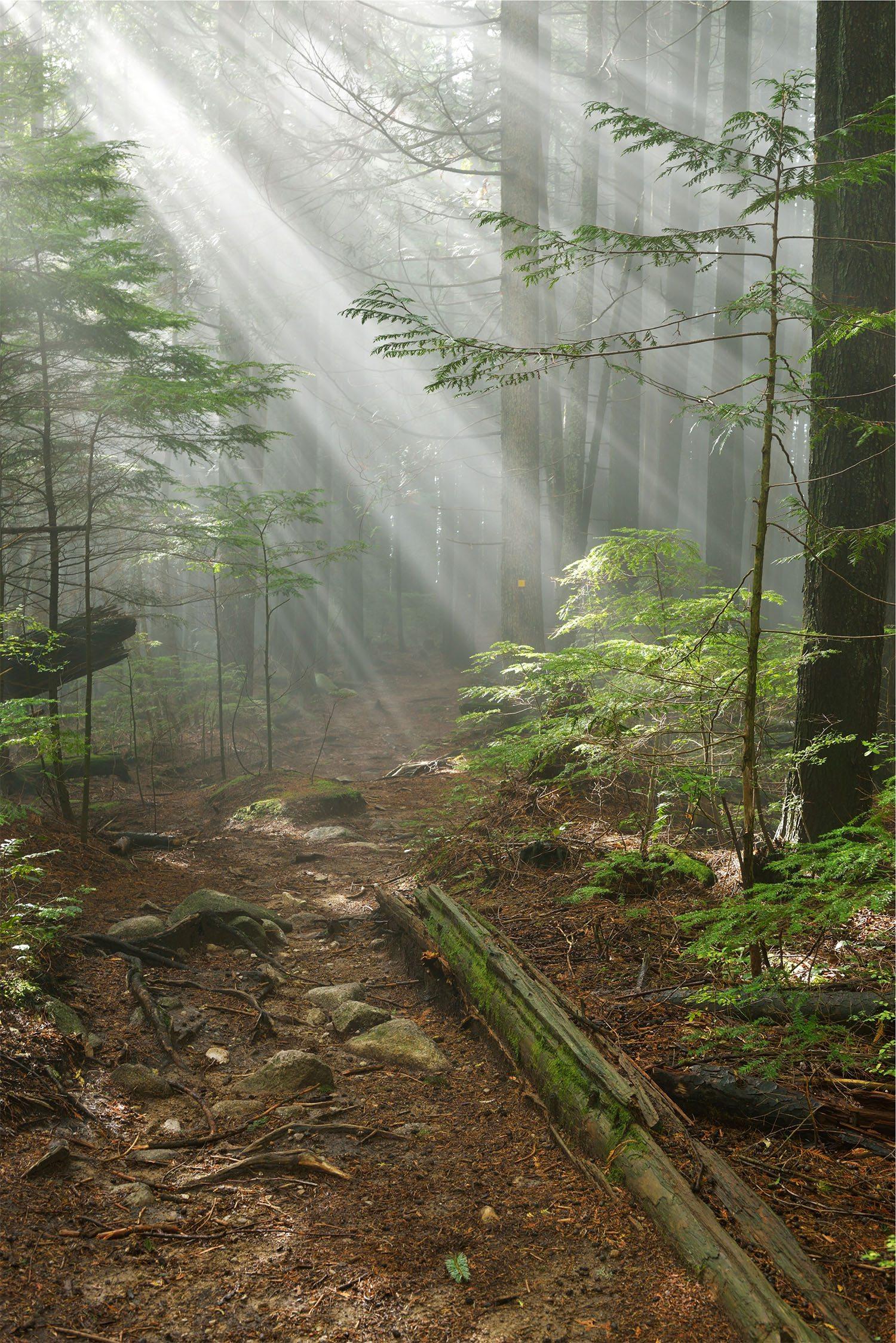 Lynn Peak trail (Lijuan Guo/Shutterstock)