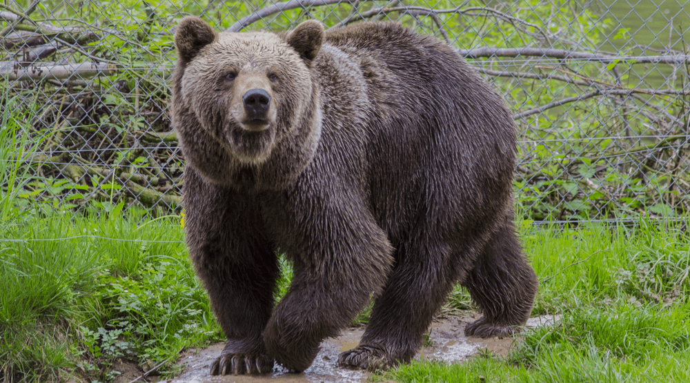 21 types of wildlife you should NOT feed in Metro Vancouver