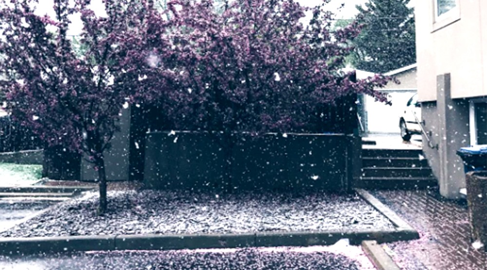 It's actually snowing in Calgary right now (PHOTOS)