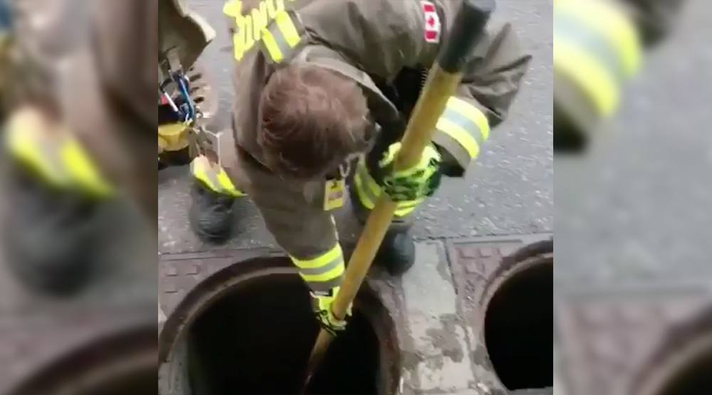 Toronto Firefighters rescue ducklings from sewer grate (VIDEO)