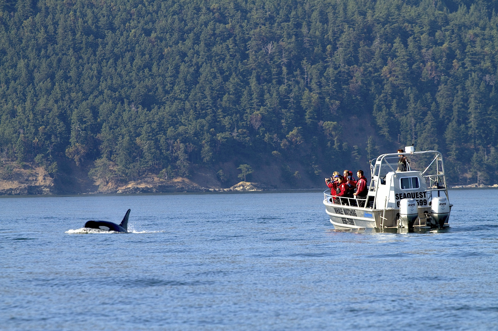 sidney-whale-watching-boat-tour