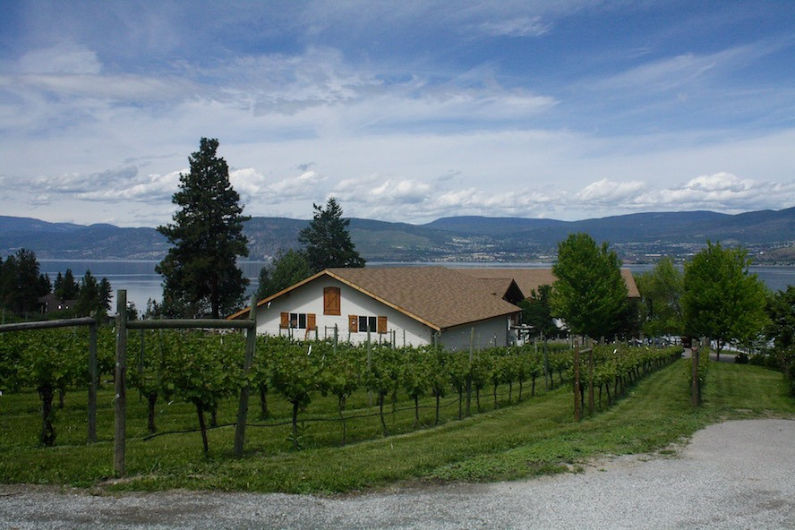 St Hubertus & Oak Bay_vineyard 2