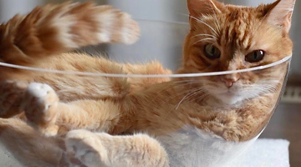 Calgary's Regal Cat Cafe is finally having its grand opening on June 24