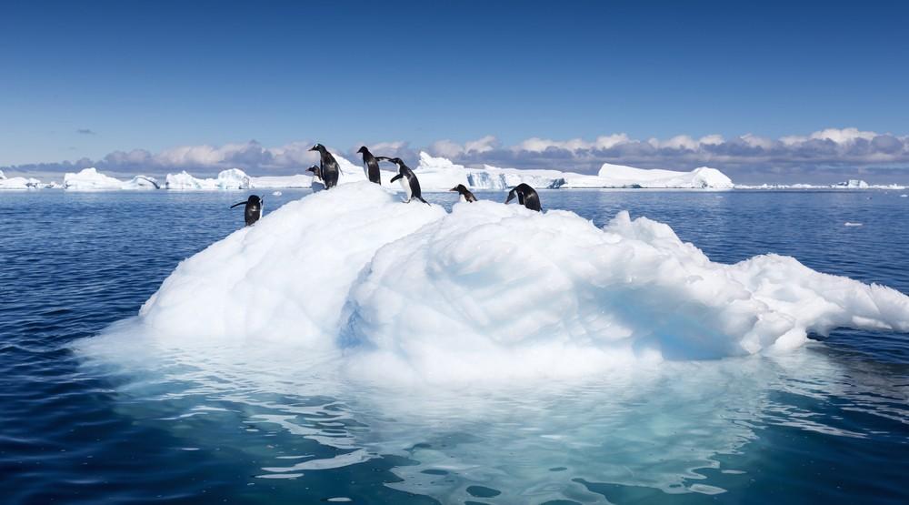 Iceberg penguins climate change antartica