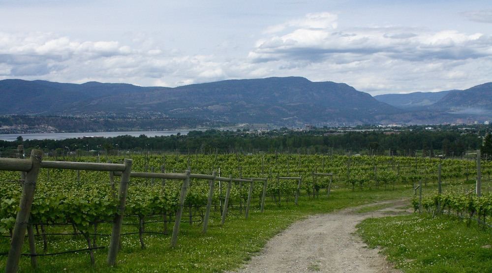5 wineries to visit for a perfect Kelowna getaway this summer