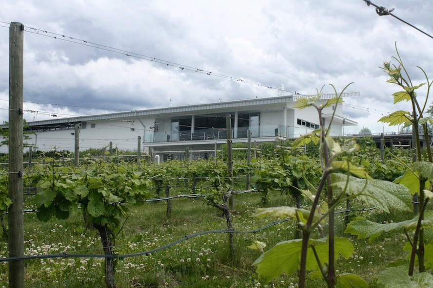 Tantalus Vineyards 3