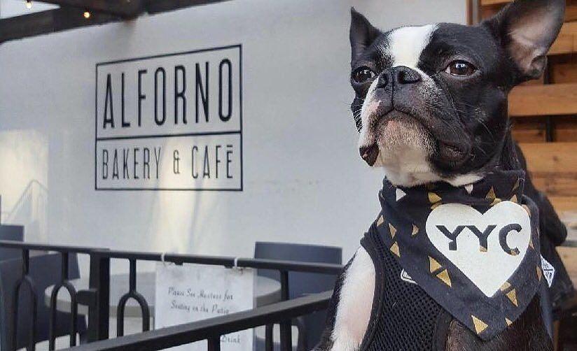 11 follow-worthy Calgary dog Instagram accounts