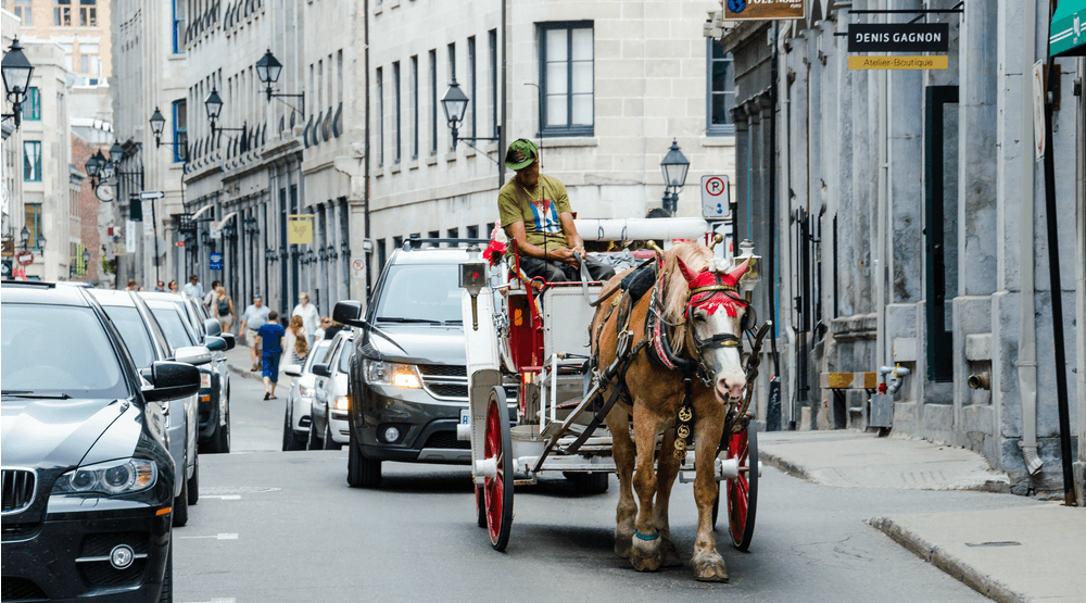 Montreal SPCA not impressed with mayor's proposed improvements to horse-carriage industry