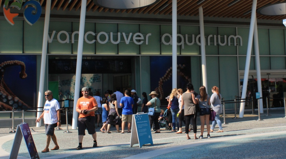 Vancouver Aquarium lays off nearly 60% of its staff