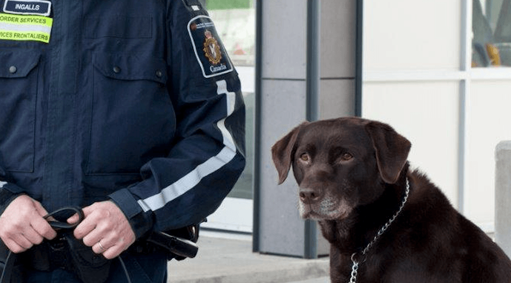 Cocaine-catching canine border guard calls it a career
