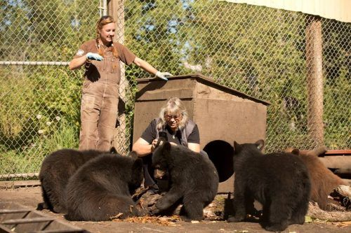 The show follows the the Langen family as they nurse the bear cubs back to health (Wild Bear Rescue/ Facebook)
