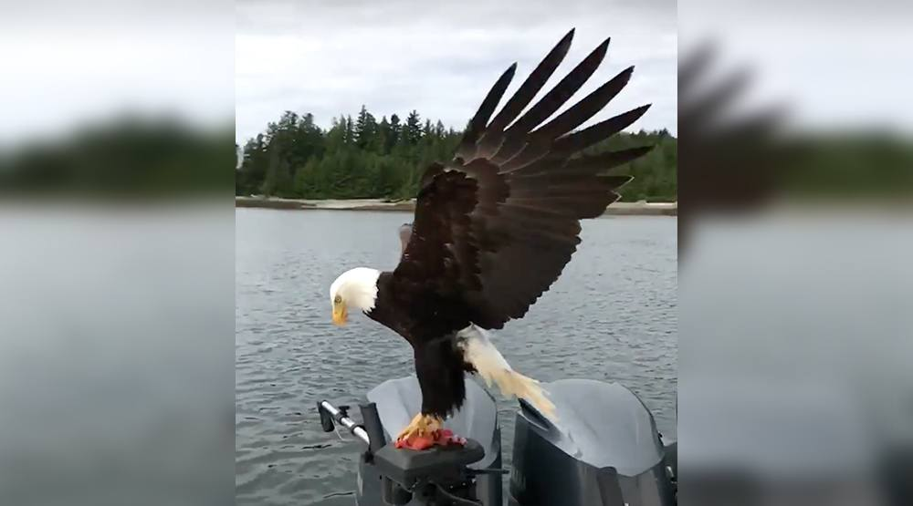Vancouver man's epic eagle footage goes viral (VIDEO)