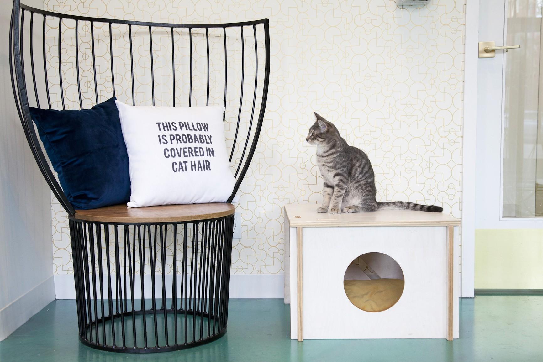Regal Cat Cafe Calgary