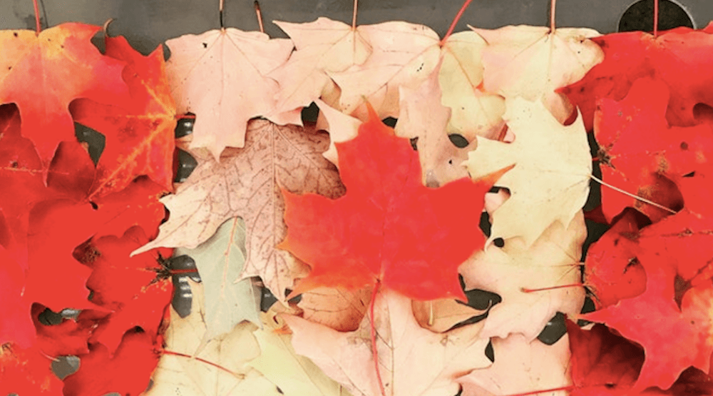 Spotted on Reddit: These Maple Leaf flags are made out of maple leaves