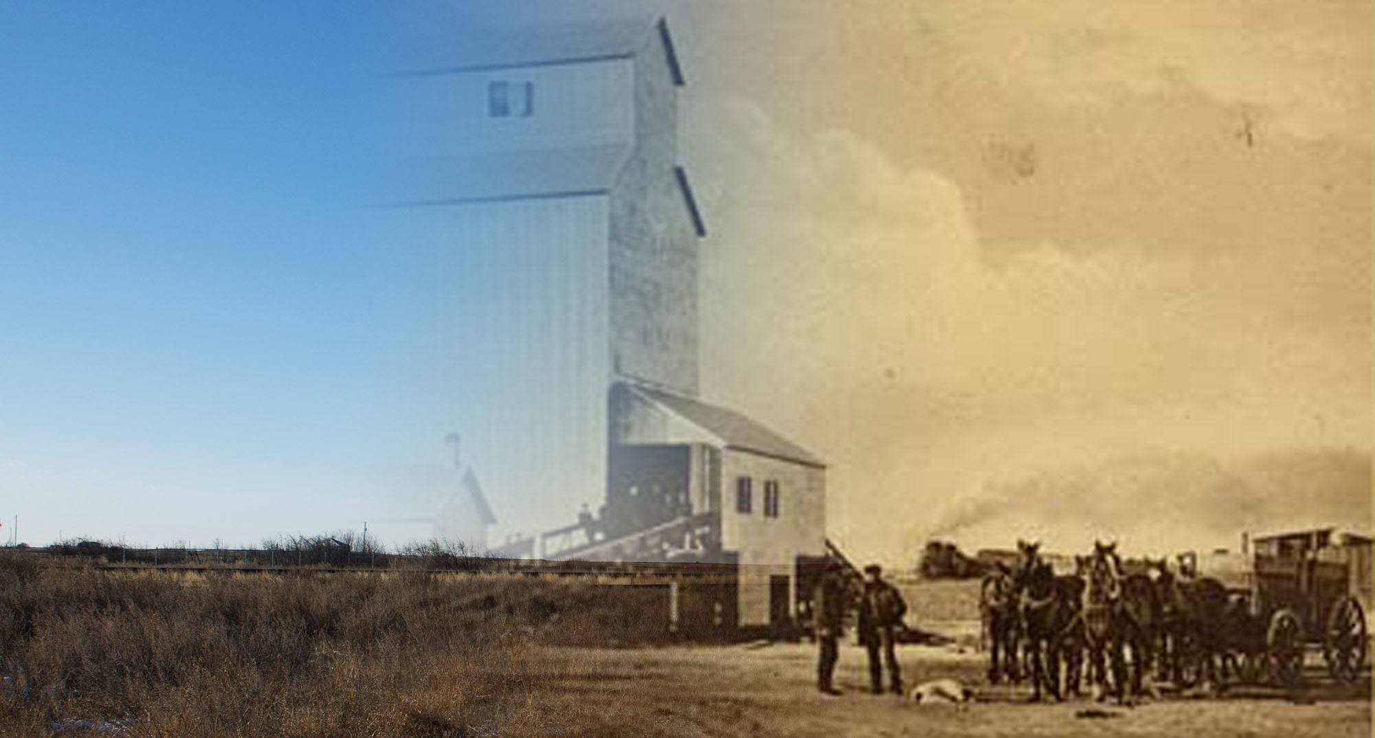 Horses delivering grain to an elevator in Gleichen in 1910 (Glenbow Museum and Archives/On This Spot)