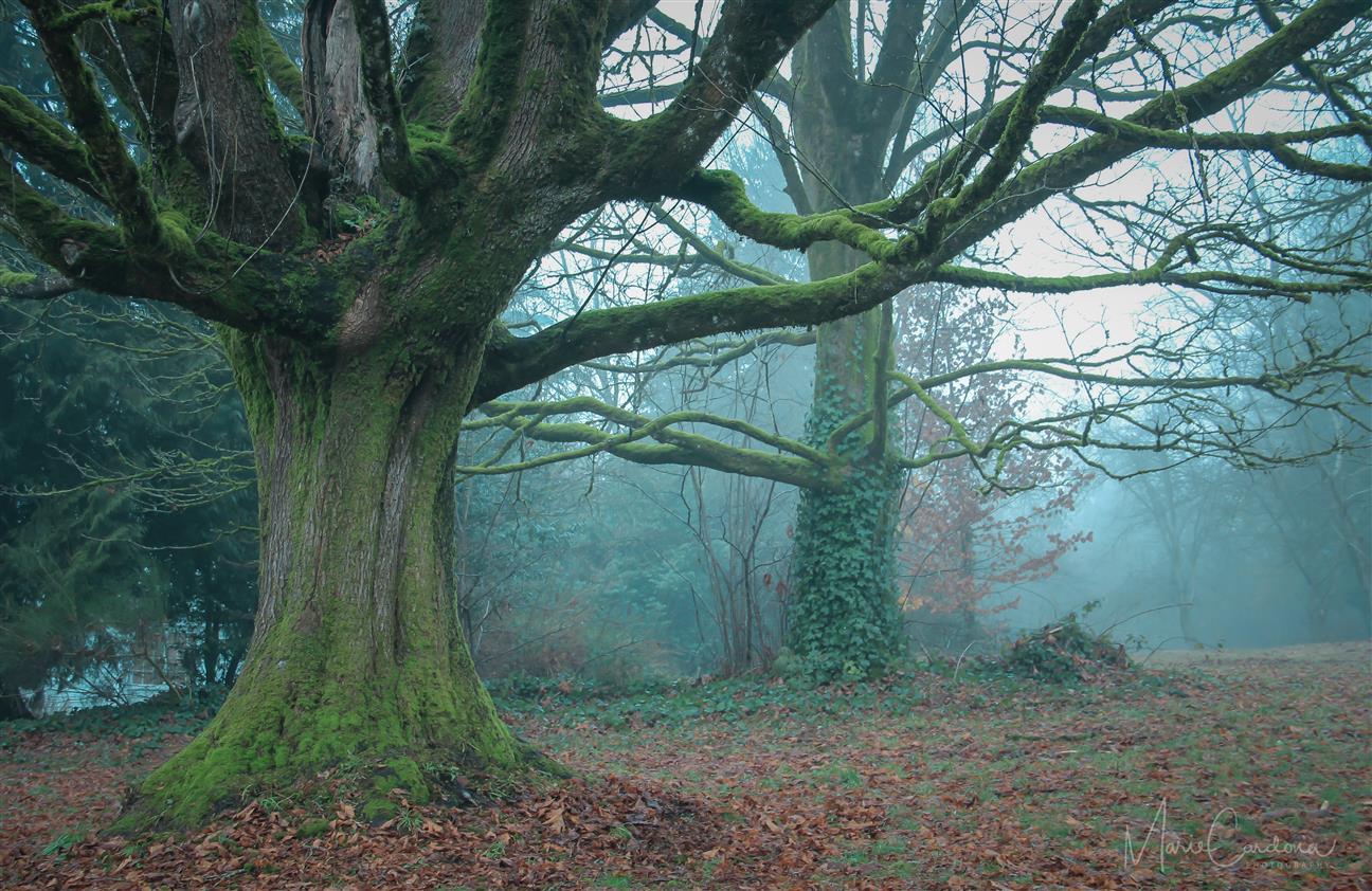 Enchanted Winter. (Marie Cardona)