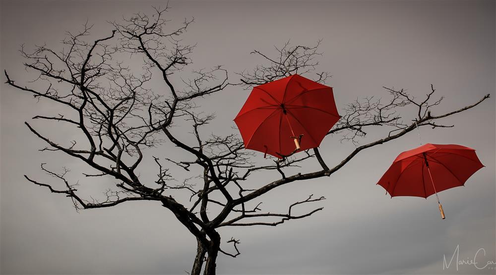 Rainblossom Project. (Marie Cardona)