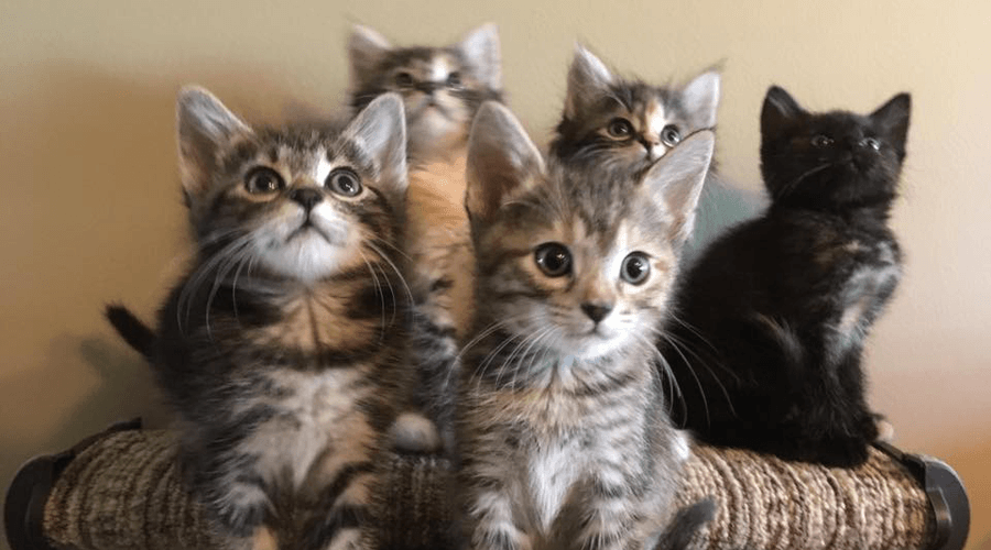 Langley shelter bursting at the seams with kittens