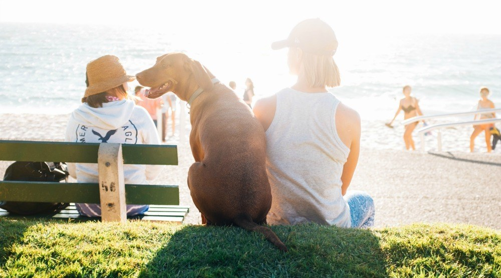 5 of the best dog parks in Vancouver