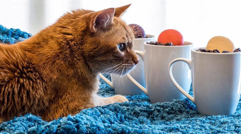30 purr-fect photos from Calgary's Regal Cat Café