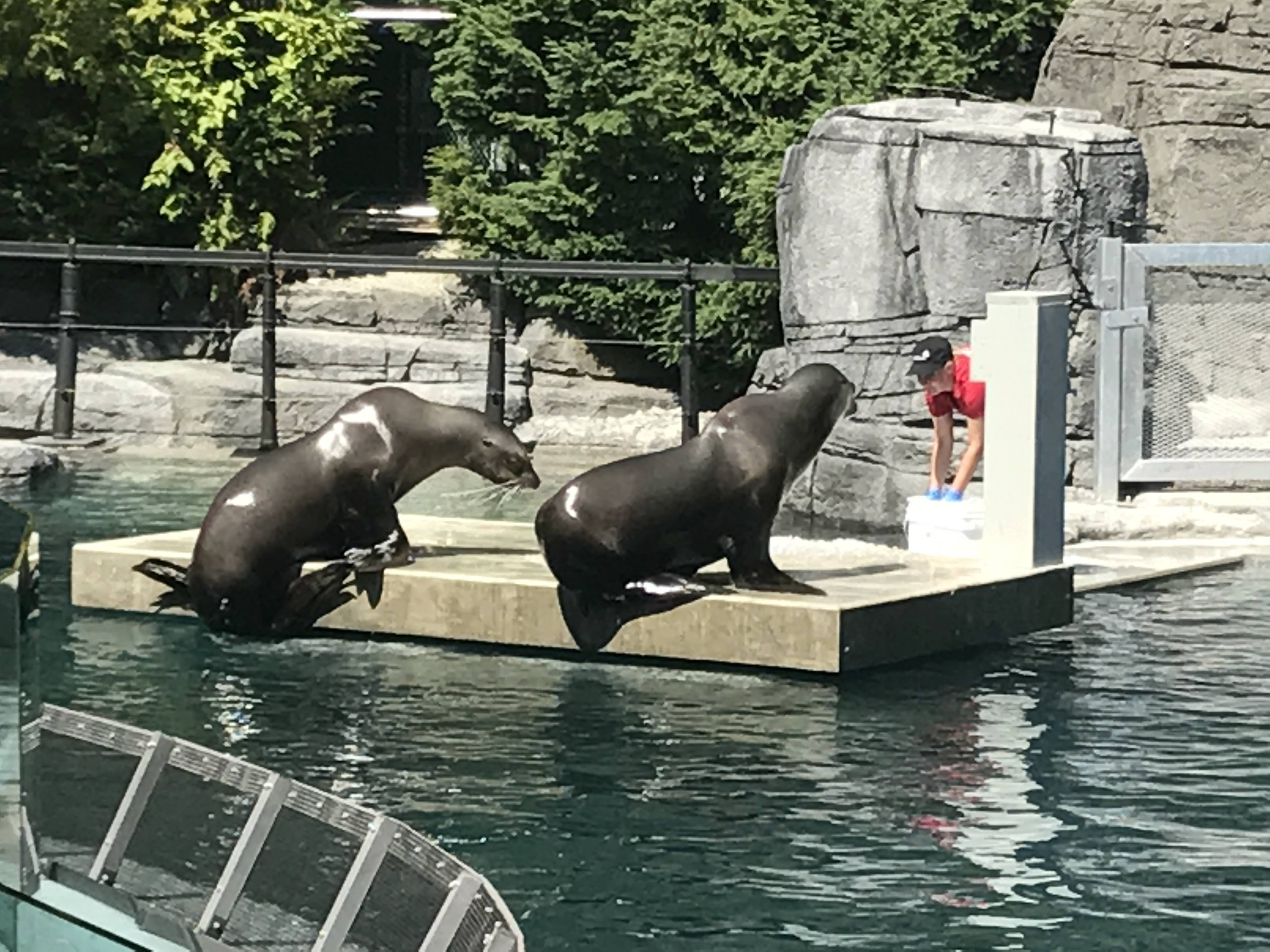 Vancouver Aquarium Sea Lion exhibit (Folake Adesugba/Daily Hive)