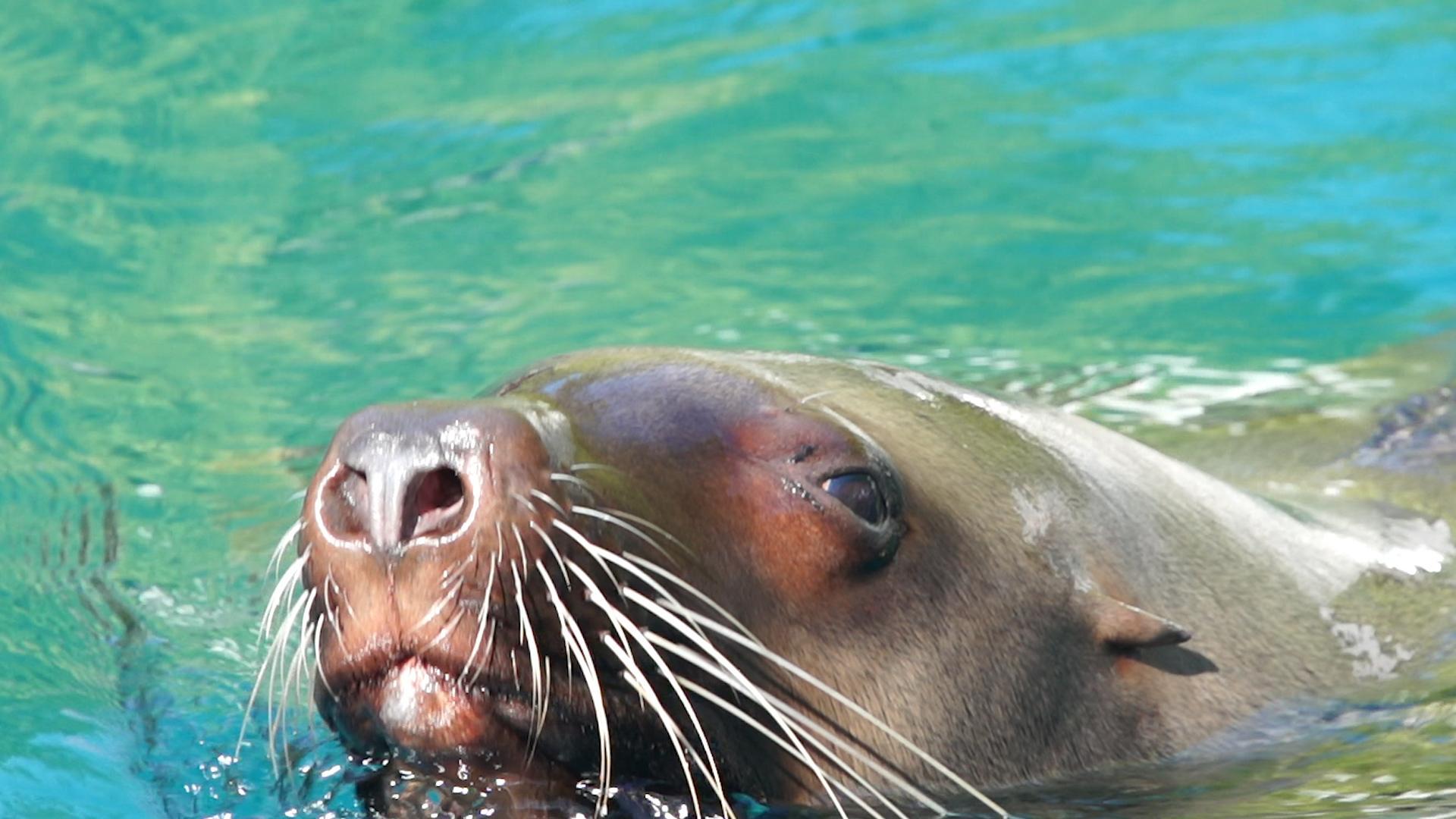 (Vancouver Aquarium)