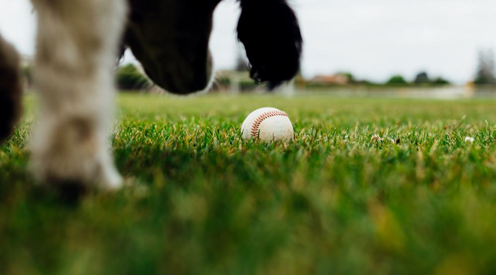 19 photos from Dog Days of Summer at Nat Bailey Stadium