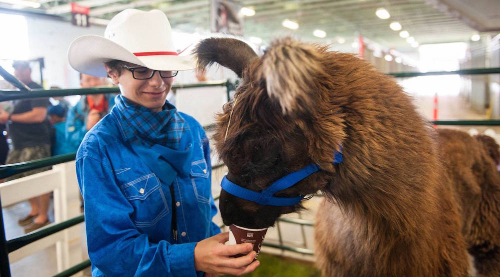 Cute animals and cowboy competitions at Aggie Days 2018
