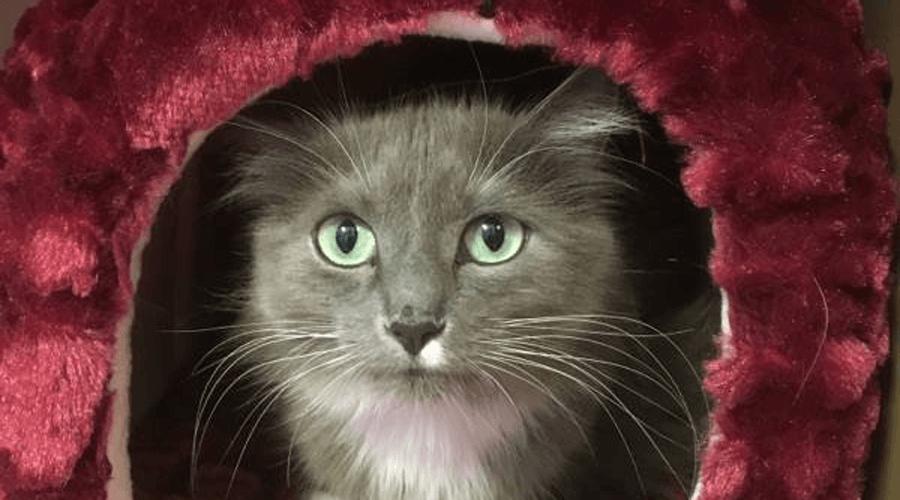 Cat evacuee pet smart