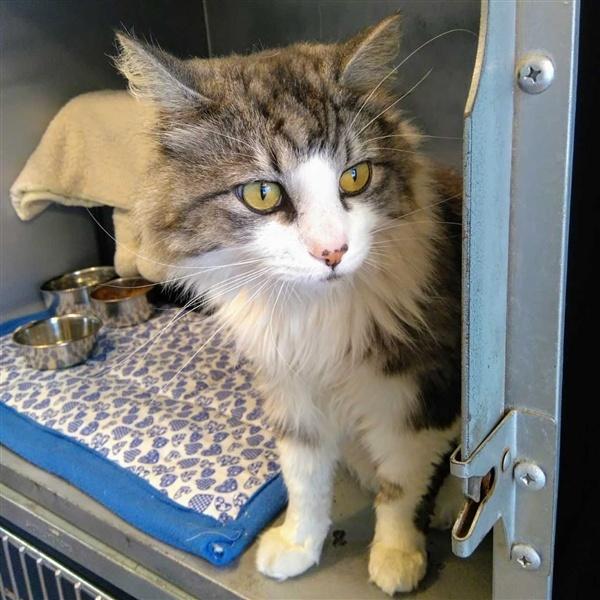Surrey Spca Cats For Adoption