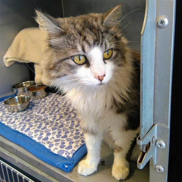 Nixon (BC SPCA)