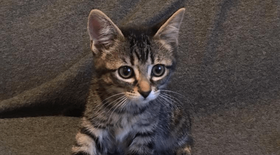 Cats and kittens evacuated from wildfires need homes