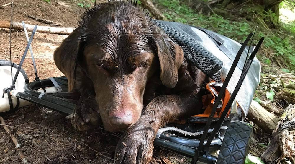 Chilliwack hiking community steps up to rescue stranded dog