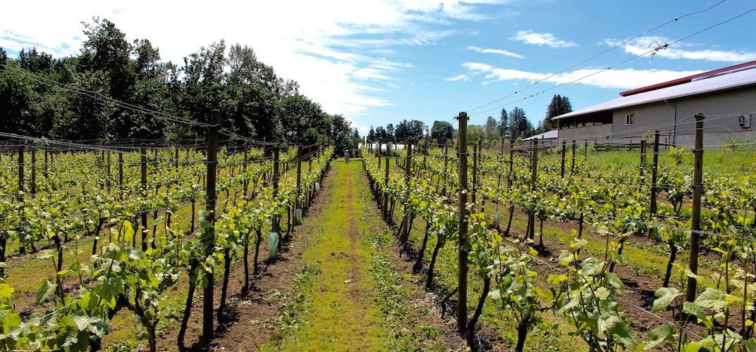 Singletree winery abbotsford