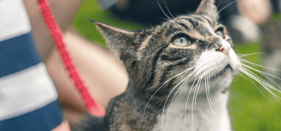 Calling all feline lovers: Montreal is hosting its very own Caturday
