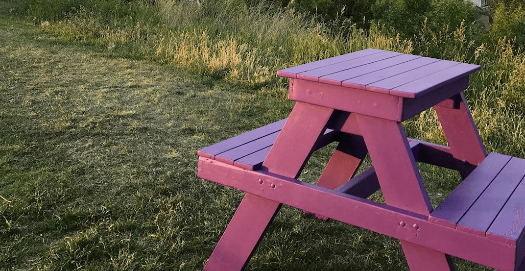 Team Nenshi's electoral campaign brings 'the purple picnic' to Calgary